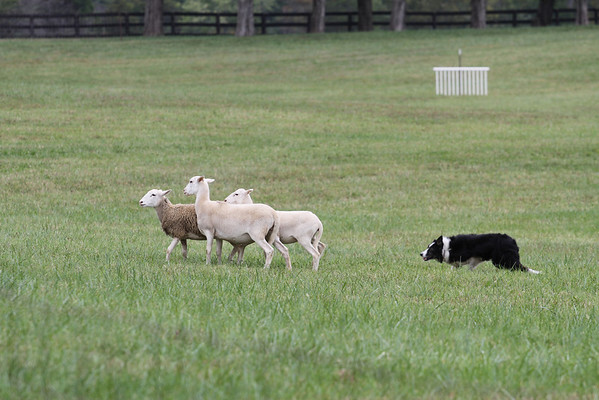 2012 Virginia Fiber Festival & Montpelier Sheep Dog Trials