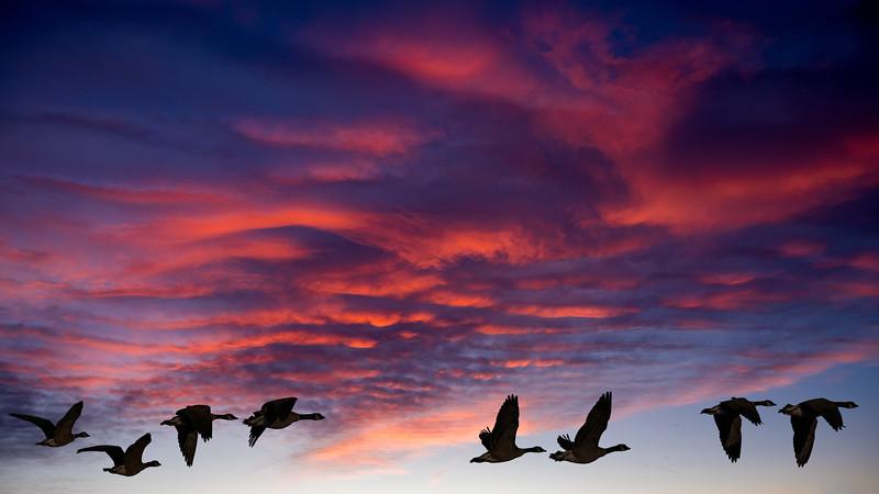 00 0020 Goosey Sunrise 16x9b.jpg
