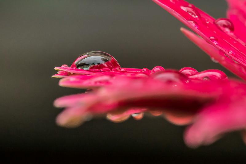 Flower-9589-2.jpg