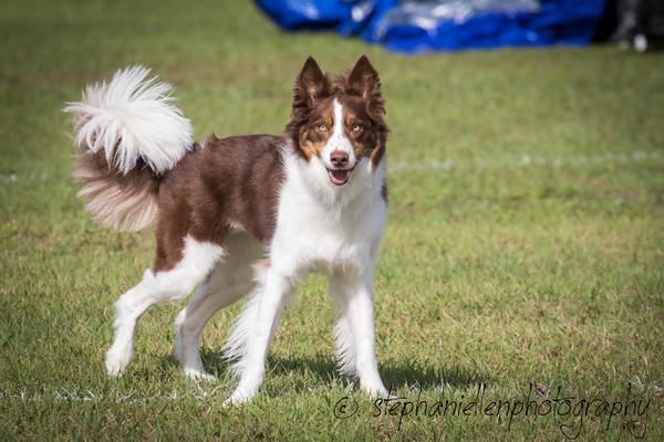 _MG_2607Up_dog_International_2016_StephaniellenPhotography.jpg