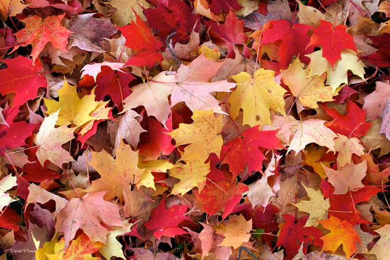 Fallen Fall Foliage