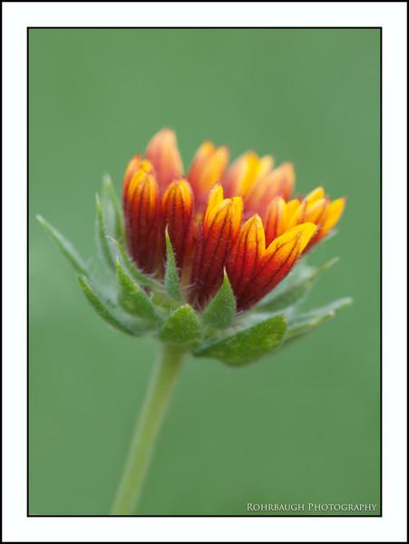 Rohrbaugh Photography Flowers 56.jpg