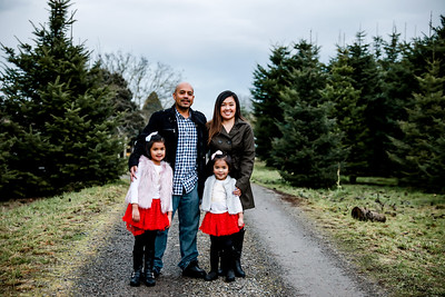 Tree farm minis 2019