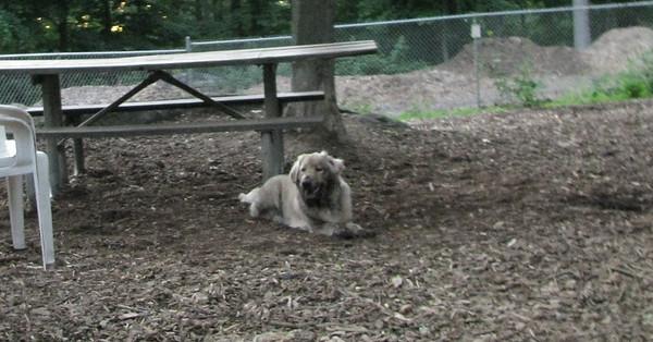 PICS JUNE 12::HAZEL (pup)