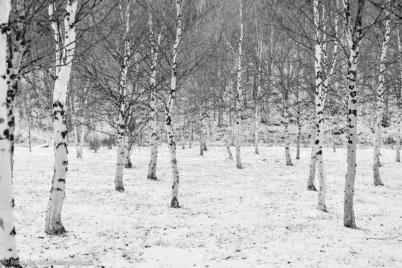 Nov.11_Utsjoki-6105868-3.jpg
