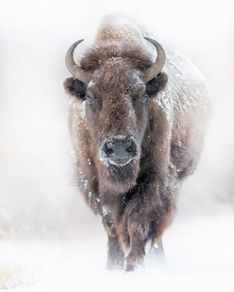 Yellowstone (12-20)