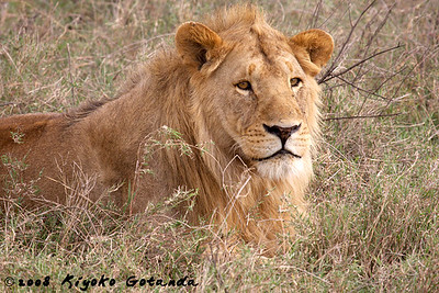 2008 East Africa - fur, scales, exoskeletons and more!