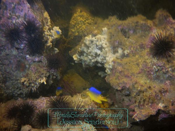 Diving Jetties @ St. Andrews