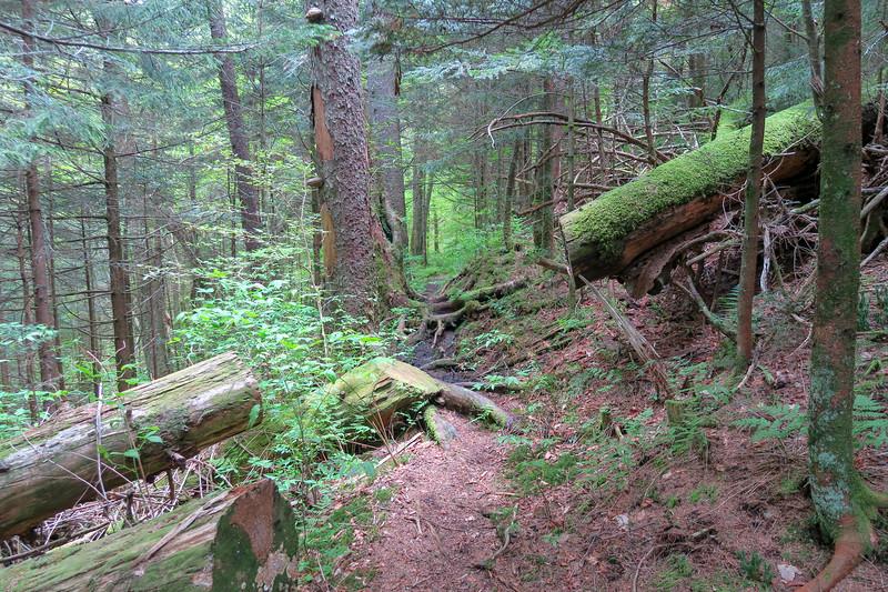 Mountains-to-Sea Trail -- 5,300'