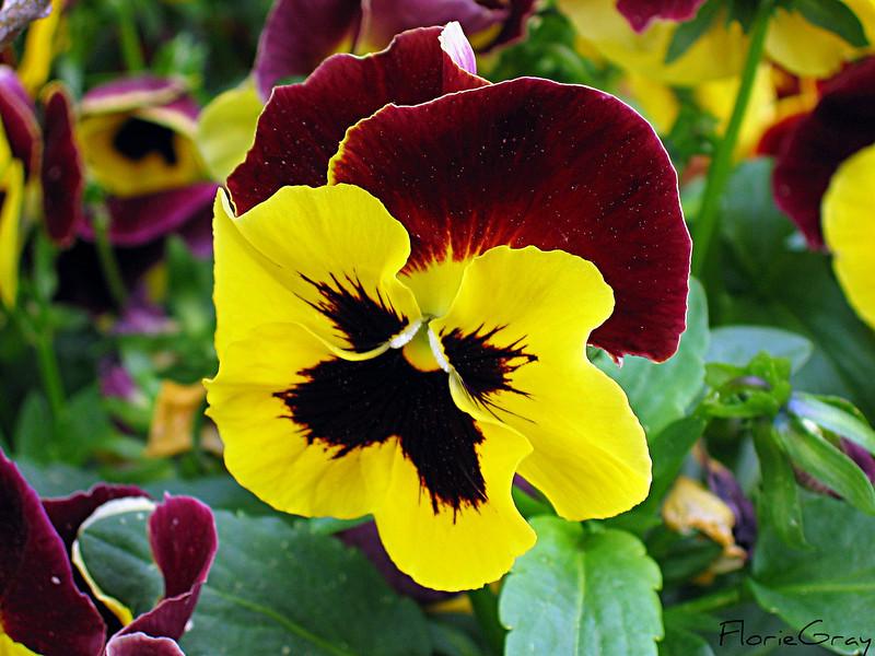 Happy Face Flower