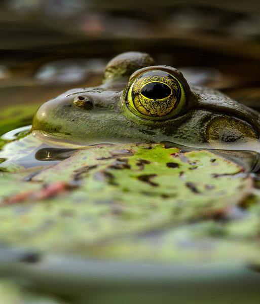 Frog's eye view Complete.jpg