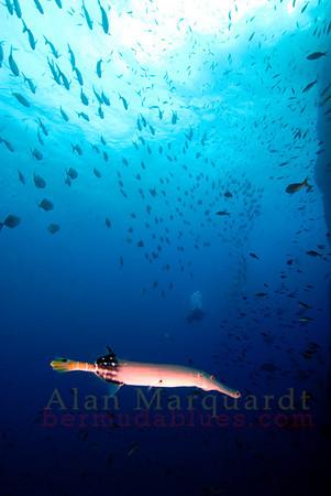 The marine life, Socorro, Mexico