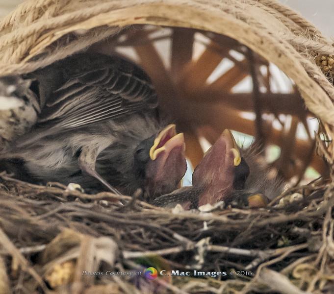 Finches26.jpg