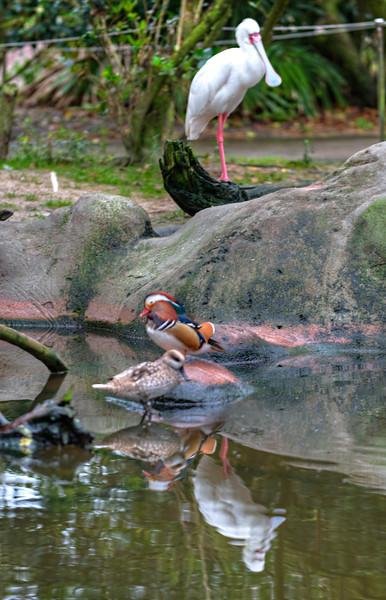 Jax Zoo Visit