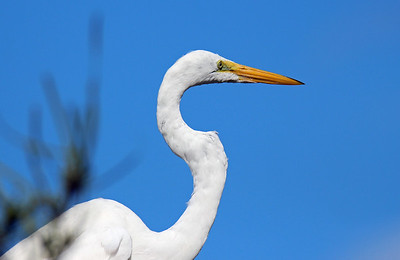 BIRDS  (45 species)