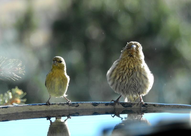 birds (218).JPG