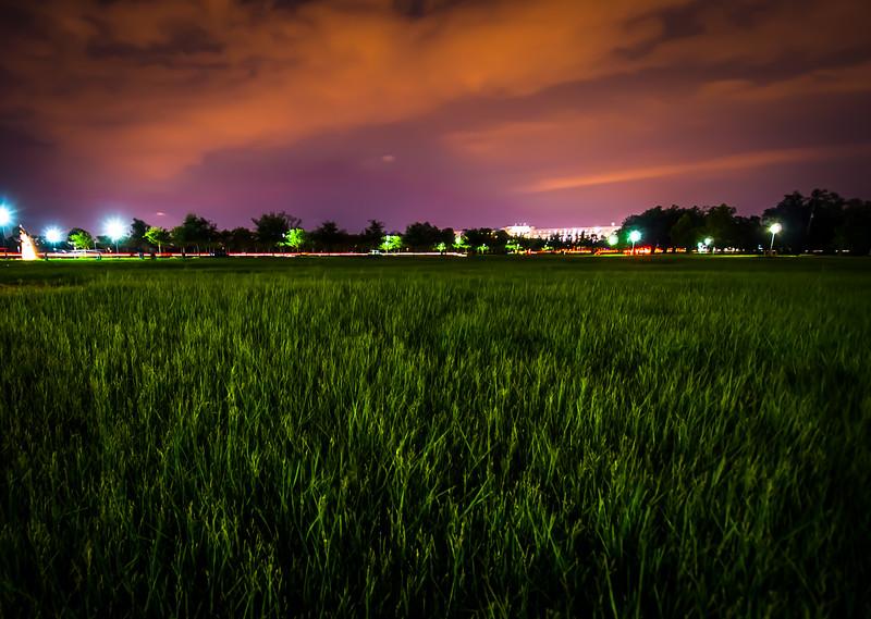 lawn at night.jpg