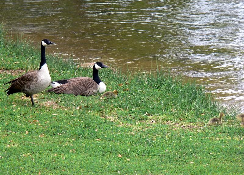 Great Outdoor Program 2010 044.jpg