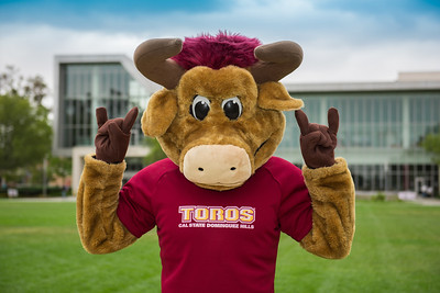 TEDDY THE TORO
