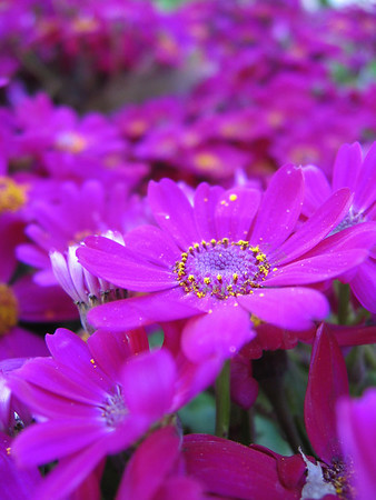 2009 Flowers