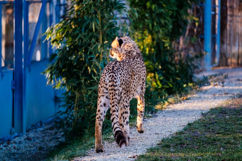 Tonis Zoo-0234.jpg