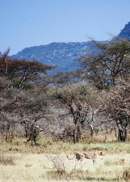 Serengeti (146).JPG