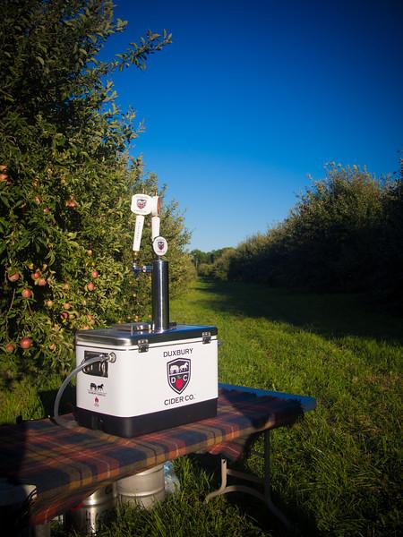 duxbury cider in field 3.jpg