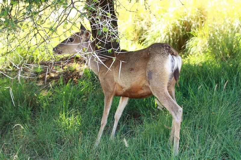 San Diego wild animal pakr 201700103.jpg