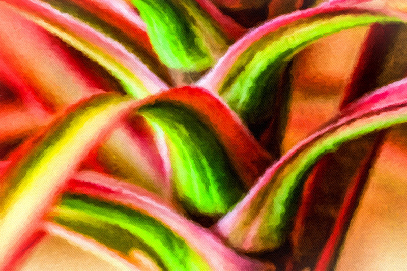 June 30 - shades of reds and greens and yellows in a plant on an early summer day.jpg
