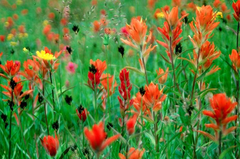 amh FLOWERS (1099).jpg
