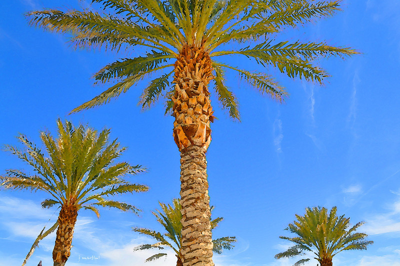 three palms 3-31-2013.jpg