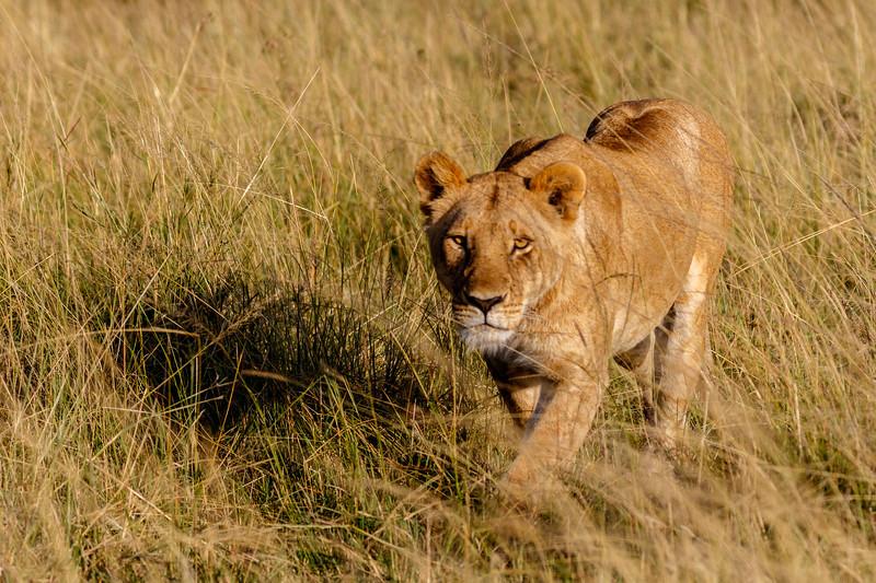 Kenya 2015-03504.jpg