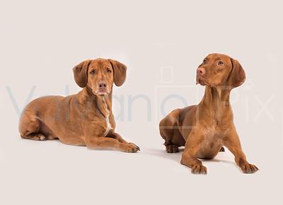Copper & Carmelo