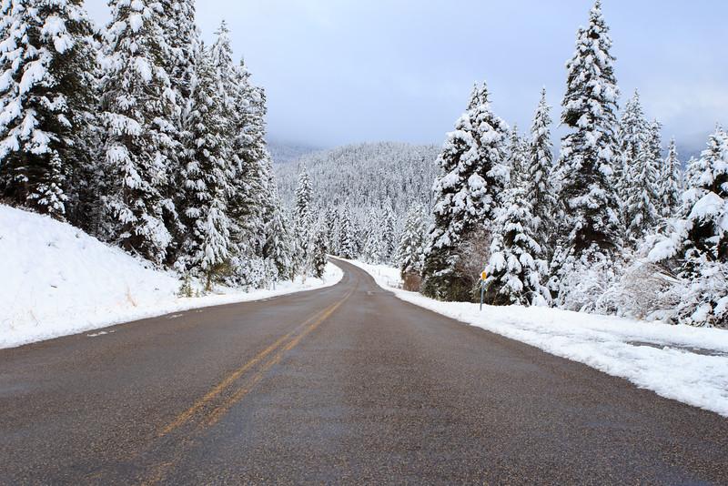 Highway through forest. 4371