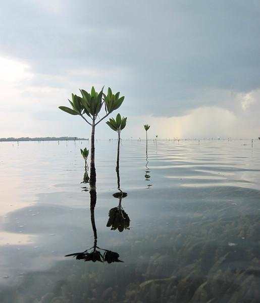 paddling mangrove creeks-4.jpg
