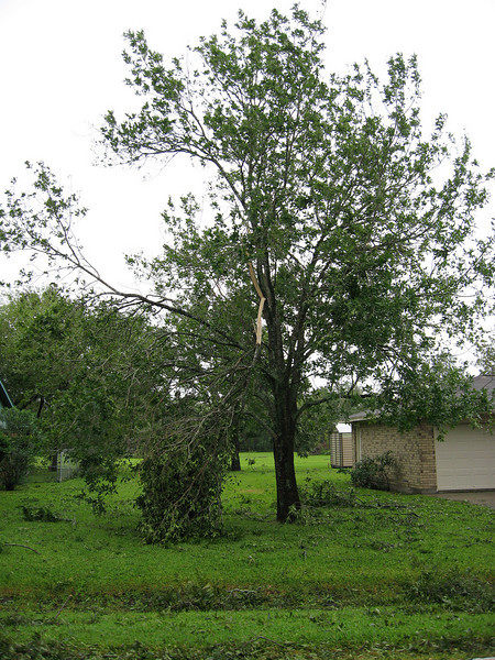 One of my trees in the front yard. I was very lucky, I only had minor tree damage and no home damage.