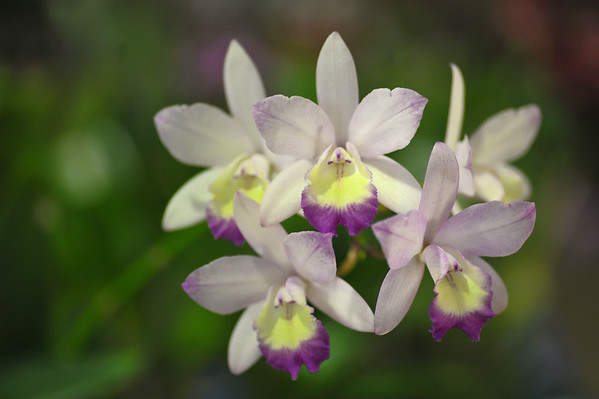Orchid Spectacular 2016