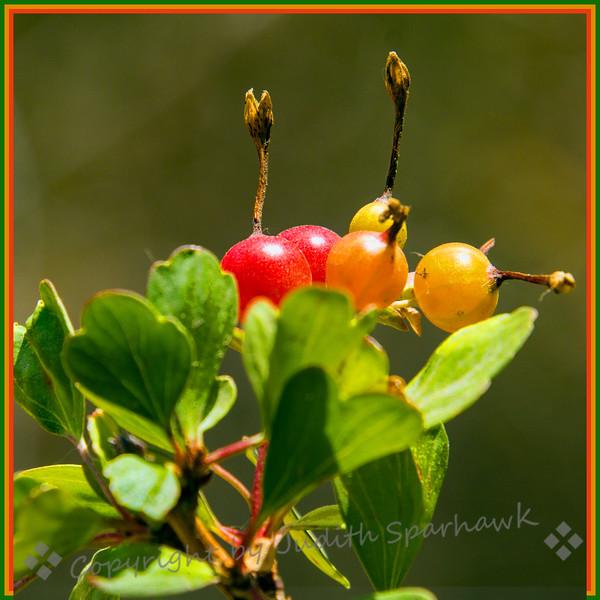 Red, Orange & Yellow - Judith Sparhawk