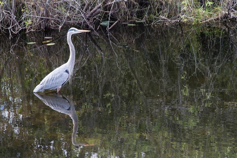 Everglades NP-0364-Select_E.jpg