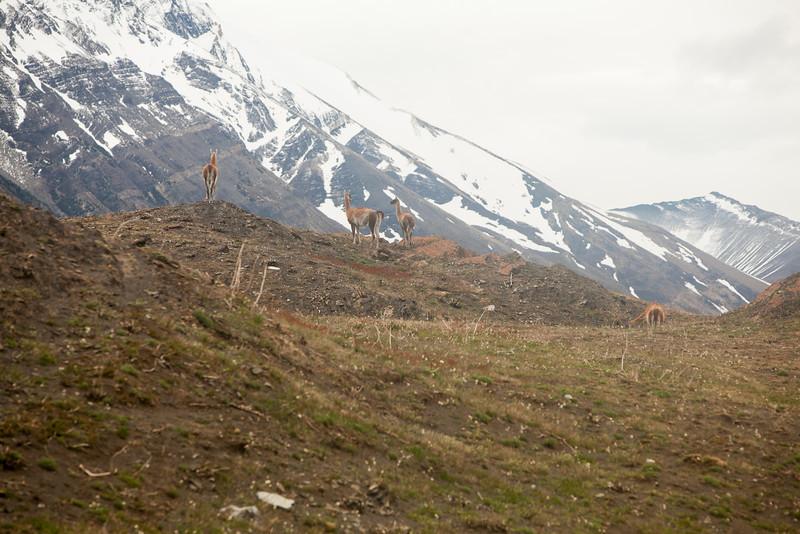 patagonia-1159.jpg