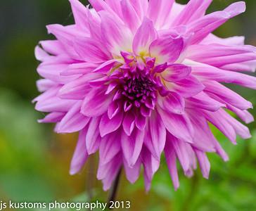 backyard flowers 10-18-2013