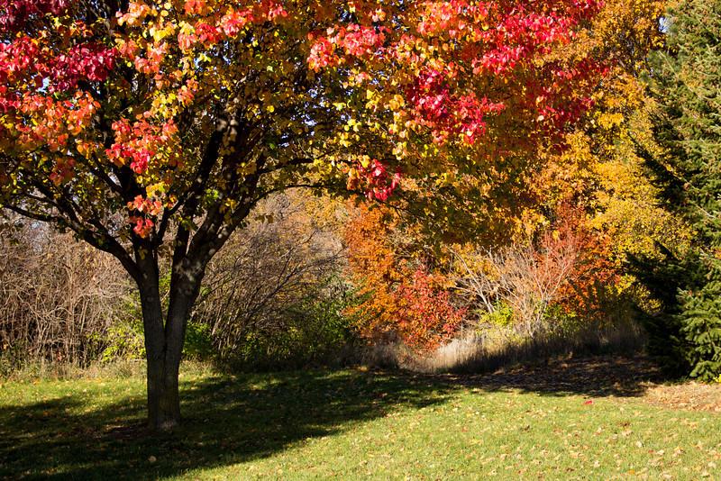 Autumn Tree 1.jpg