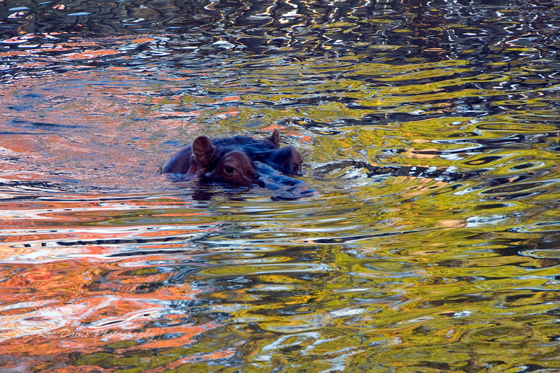 Floating in a Monet Painting .jpg
