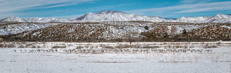 Sandhills in the snow 6188 pano-.jpg