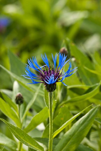 Flower-0235