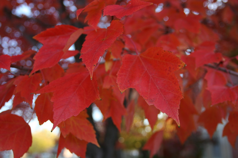Fall_Images_103008_0025.JPG