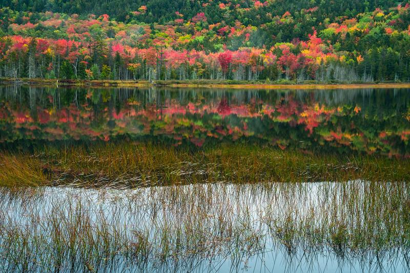 Acadia NP Fall 2019-10.jpg