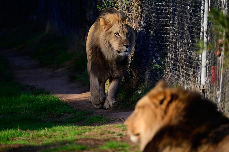 Oakland Zoo-71288-19.jpg