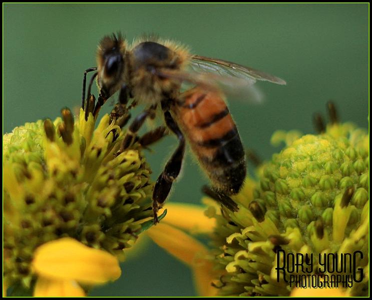 Bee06.png