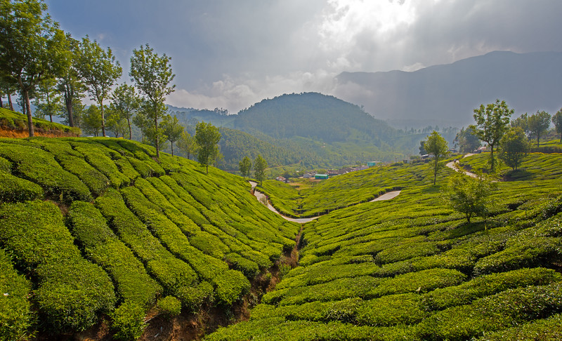 Tea Plantations of Munnar